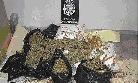 marihuana dehesas