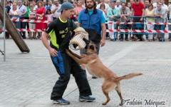 exhibición canina-28