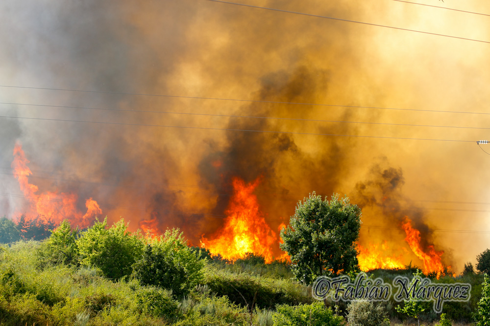 incendio fuego pantano-16